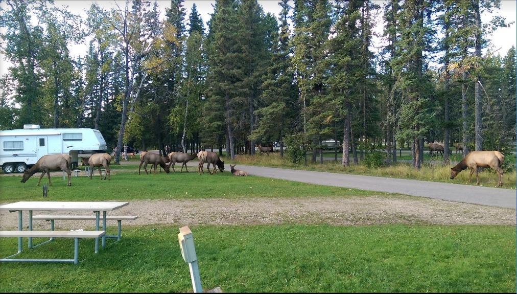Red deer camp
