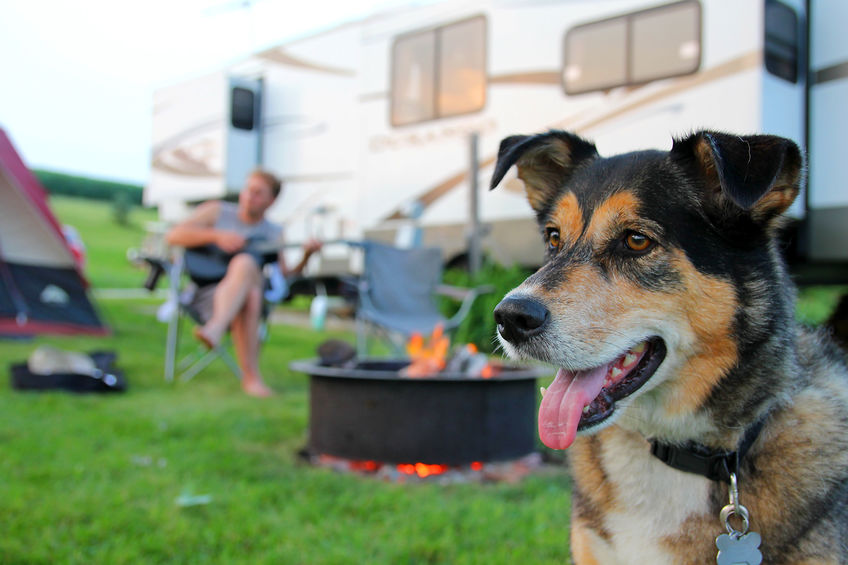 Featured image for Camping with Dogs? These Are the Best Destinations in Canada to Visit